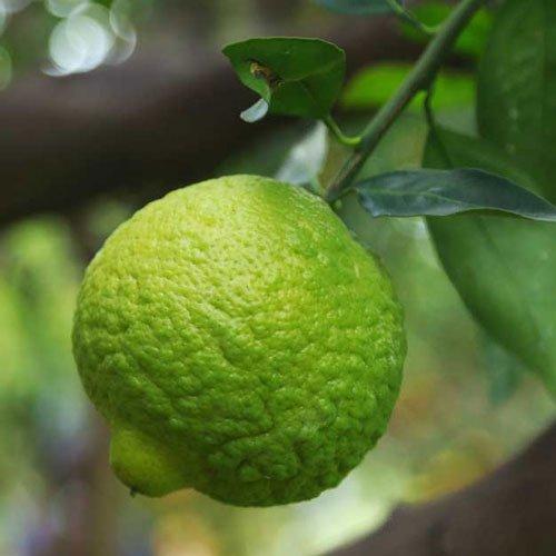 Lime-aroma